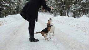 Κλείστε επάνω το πορτρέτο της χαριτωμένης νέας γυναίκας hipster που έχει τη διασκέδαση στο χειμερινό πάρκο με το σκυλί τους μια φ απόθεμα βίντεο