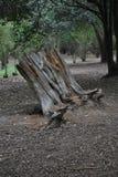 Κοίλος κορμός του νεκρού δέντρου στοκ εικόνες