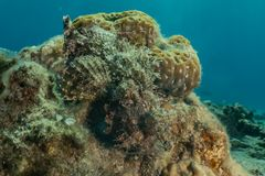 Κοραλλιογενείς ύφαλοι και εργοστάσια νερού στη Ερυθρά Θάλασσα στοκ εικόνες με δικαίωμα ελεύθερης χρήσης