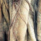 Κορμός του δέντρου στοκ φωτογραφία με δικαίωμα ελεύθερης χρήσης