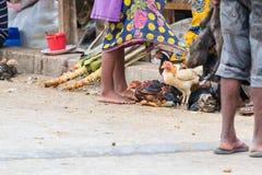 Κοτόπουλα στην οδό δίπλα στους προμηθευτές έτοιμους να πωληθούν από τους εμπόρους σε Toliara Μαδαγασκάρη στοκ εικόνα με δικαίωμα ελεύθερης χρήσης