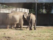 Κοπάδι των ελεφάντων στοκ εικόνες