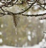 Κρεμώντας βρύο στο παλαιό δάσος στοκ φωτογραφία με δικαίωμα ελεύθερης χρήσης