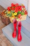 Κόκκινες μπότες της Farmer που τοποθετούνται στα ξύλινα σκαλοπάτια ζωηρόχρωμα λουλούδια τρόπου ζωής, είσοδος σπιτιών με την κόκκι στοκ εικόνες