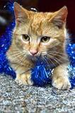 Κόκκινη γάτα και μπλε Χριστούγεννα στοκ εικόνα με δικαίωμα ελεύθερης χρήσης