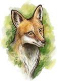 Κόκκινο πορτρέτο αλεπούδων ελεύθερη απεικόνιση δικαιώματος