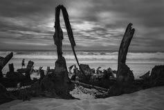 Κόλπος συντριμμιών της Ethel με τα μεγάλα συντρίμμια στην παραλία, ένα άτομο που περνά από στοκ εικόνες με δικαίωμα ελεύθερης χρήσης