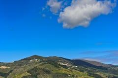 Κυλώντας λόφοι με τους αμπελώνες στοκ εικόνα