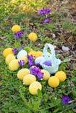 Κυνήγι αυγών Το υπόβαθρο Πάσχας άνοιξη με τα χρωματισμένα αυγά, κρόκος ανθίζει, καλάθι στον κήπο στοκ φωτογραφίες με δικαίωμα ελεύθερης χρήσης