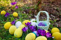 Κυνήγι αυγών Το υπόβαθρο Πάσχας άνοιξη με τα χρωματισμένα αυγά, κρόκος ανθίζει, καλάθι στον κήπο στοκ εικόνες