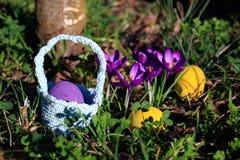 Κυνήγι αυγών Το υπόβαθρο Πάσχας άνοιξη με τα χρωματισμένα αυγά, κρόκος ανθίζει, καλάθι στον κήπο στοκ εικόνες με δικαίωμα ελεύθερης χρήσης
