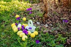 Κυνήγι αυγών Το υπόβαθρο Πάσχας άνοιξη με τα χρωματισμένα αυγά, κρόκος ανθίζει, καλάθι στον κήπο στοκ φωτογραφίες