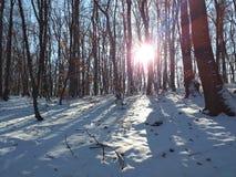 Λάμψτε στο δάσος στοκ εικόνες με δικαίωμα ελεύθερης χρήσης