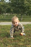 Λίγο αγόρι μικρών παιδιών που τρώει το κόκκινο μήλο στον οπωρώνα στοκ φωτογραφία