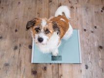 Λίγο σκυλί σε μια κλίμακα λουτρών που εξετάζει τη κάμερα στοκ εικόνα με δικαίωμα ελεύθερης χρήσης