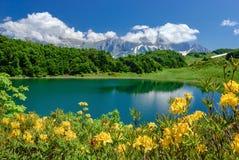 Λίμνη στα βουνά με τα λουλούδια στο πρώτο πλάνο Λίμνη Huko, Καύκασος στοκ φωτογραφία με δικαίωμα ελεύθερης χρήσης