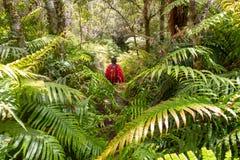 Λίμνη Tarawera, Rotorua - Νέα Ζηλανδία στοκ φωτογραφίες