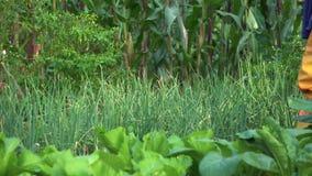 Λαχανικό ποτίσματος κηπουρών στο φυτικό κήπο πολλοί τύποι λαχανικών γύρω απόθεμα βίντεο