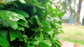 Λεπτομέρεια του πράσινου φύλλου και υγρός όταν επιβραδύνουν οι βρέχοντας πτώσεις που πέφτουν κάτω, απόθεμα βίντεο