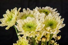 Λεπτομέρεια astra φθινοπώρου στοκ φωτογραφίες με δικαίωμα ελεύθερης χρήσης