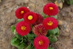 Λουλούδια που αυξάνονται από το ρύπο στοκ εικόνα