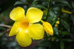 Λουλούδι και ο οφθαλμός στοκ φωτογραφία με δικαίωμα ελεύθερης χρήσης