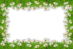 Λουλούδι Chamomile στο άσπρο υπόβαθρο με το διάστημα αντιγράφων στοκ φωτογραφία με δικαίωμα ελεύθερης χρήσης
