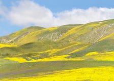 Λόφοι γύρω από τη Santa Margarita, Καλιφόρνια, δονούμενος κίτρινος άνθισης στοκ φωτογραφία με δικαίωμα ελεύθερης χρήσης