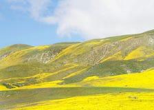 Λόφοι γύρω από τη Santa Margarita, Καλιφόρνια, δονούμενος κίτρινος άνθισης στοκ φωτογραφίες με δικαίωμα ελεύθερης χρήσης
