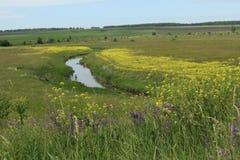 Λόφοι και τομείς που εισβάλλονται με τα λουλούδια και τα χορτάρια στοκ εικόνα με δικαίωμα ελεύθερης χρήσης