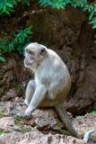 Λυπημένος γούνινος πίθηκος που ζητά τα τρόφιμα, Ταϊλάνδη στοκ φωτογραφία
