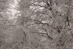 Μέσω της δαντέλλας χιονισμένου στοκ φωτογραφία