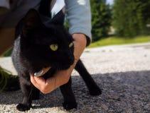 Μαύρη γάτα στον κήπο στο πλαίσιο του πίνακα Σλοβακία στοκ εικόνα με δικαίωμα ελεύθερης χρήσης