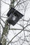 Μαύρη να τοποθετηθεί ένωση κιβωτίων στο δέντρο σημύδων στο wintertime στοκ εικόνες με δικαίωμα ελεύθερης χρήσης