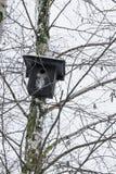 Μαύρη να τοποθετηθεί ένωση κιβωτίων στο δέντρο σημύδων στο wintertime στοκ φωτογραφίες