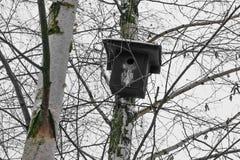 Μαύρη να τοποθετηθεί ένωση κιβωτίων στο δέντρο σημύδων στο wintertime στοκ εικόνες