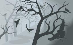 Μαύροι κόρακες σε ένα φοβερό ομιχλώδες δάσος απεικόνιση αποθεμάτων