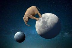 Μεγάλος ελέφαντας στο φεγγάρι στον κόσμο διανυσματική απεικόνιση