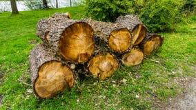 Μερικά κούτσουρα δέντρων στοκ εικόνα με δικαίωμα ελεύθερης χρήσης