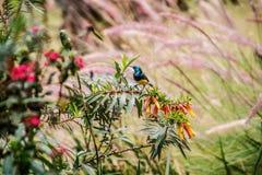 Μεταβλητή συνεδρίαση sunbird σε έναν κλάδο ενός δέντρου στοκ φωτογραφία με δικαίωμα ελεύθερης χρήσης