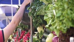 Μετρητής με την πρασινάδα και λαχανικά στην αγορά πόλεων στη θερινή ημέρα και ένα unrecognizable θολωμένο άτομο που παίρνει μια τ απόθεμα βίντεο