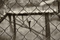 Μια αφηρημένη γραπτή πίσω επίγεια εικόνα ενός σιδερωμένου φράκτη στοκ εικόνες