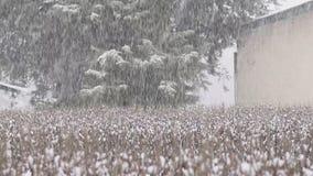 Μια όμορφη άποψη χιονοπτώσεων από το σπίτι μου φιλμ μικρού μήκους