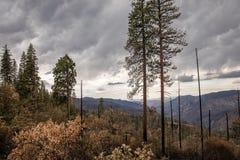 Μια φυσική άποψη φθινοπώρου, Yosemite, ασβέστιο στοκ εικόνες
