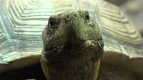 Μια χελώνα ή ένα Tortoise απόθεμα βίντεο