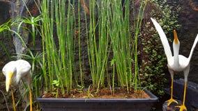 Μικρές εγκαταστάσεις στο δοχείο succulents στοκ εικόνα με δικαίωμα ελεύθερης χρήσης