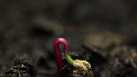Μικρές εγκαταστάσεις που αυξάνονται στη βλάστηση νεαρών βλαστών χρόνος-σφάλματος γεωργίας θερμοκηπίων φιλμ μικρού μήκους