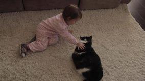 Μικρή συνεδρίαση κοριτσιών στο πάτωμα και παιχνίδι με την κόκκινη χνουδωτή γάτα φιλμ μικρού μήκους