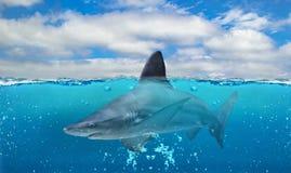 Μισή υποβρύχια φωτογραφία του τροπικού καρχαρία παραδείσου withbig στο Ειρηνικό Ωκεανό στοκ εικόνες