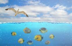 Μισή υποβρύχια φωτογραφία του τροπικού παραδείσου με μια ομάδα ζωηρόχρωμων ψαριών και πετώντας άλμπατρος στοκ φωτογραφία με δικαίωμα ελεύθερης χρήσης